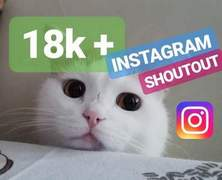 I will do promotion or shoutout on my 18k cat instagram