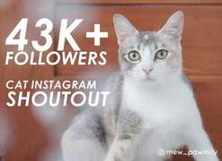 I will give you a shoutout on my 43k cat instagram page