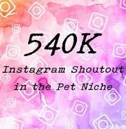 I will give you an instagram shoutout on my 540k pets page