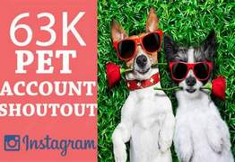 I will give you an instagram shoutout on my 63k pets account