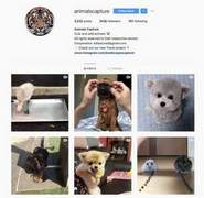 I will shoutout on 243k instagram animals account